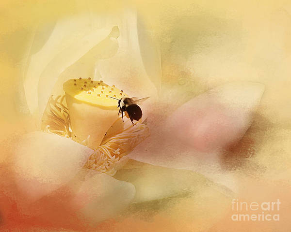 Photograph - Busy Bee by Pam  Holdsworth