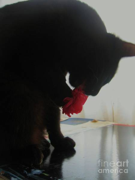 Wall Art - Photograph - Cat Eating Camellia by Seon-Jeong Kim
