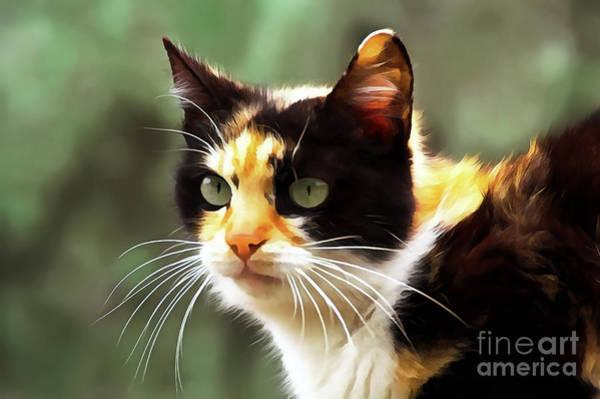 Painting - Cat Portrait Paint by Odon Czintos