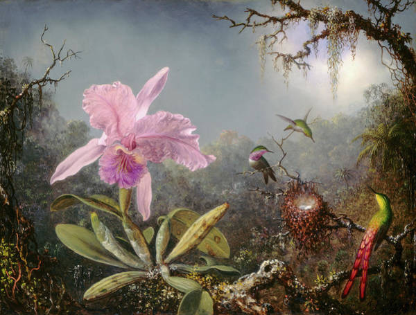 Painting - Cattleya Orchid And Three Hummingbirds by Martin Johnson Heade