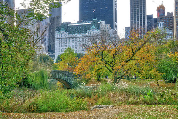 Wall Art - Photograph - Central Park by June Marie Sobrito