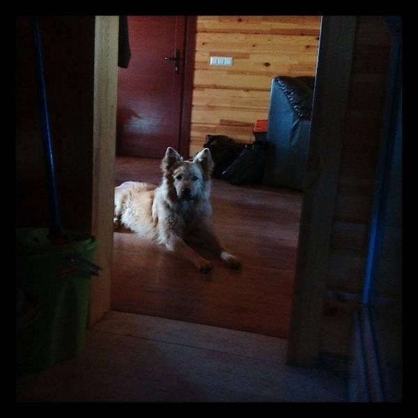 Chuvak #dog #animal #pet #portrait Art Print