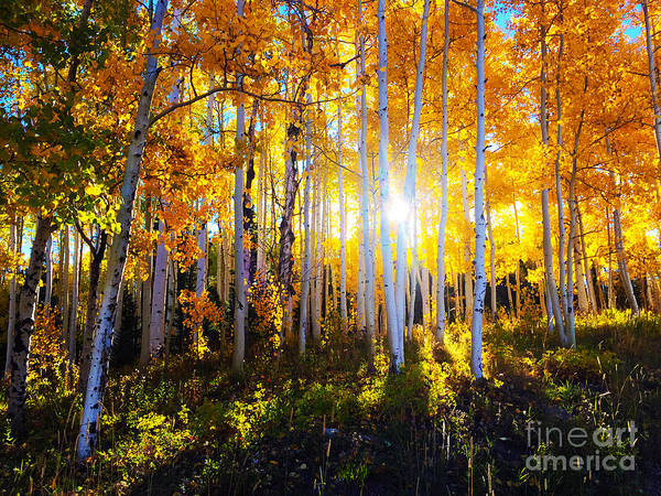 Art Print featuring the photograph Colorado Autumn by Kate Avery