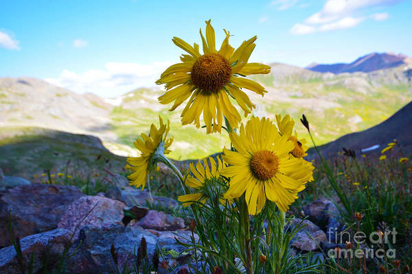 Art Print featuring the photograph Colorado Wildflowers by Kate Avery