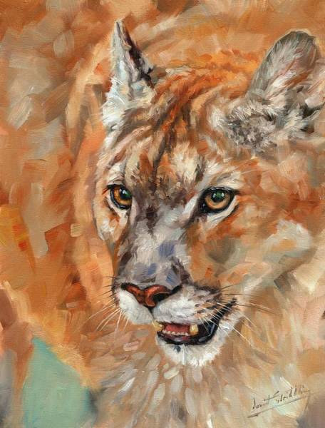Painting - Cougar by David Stribbling