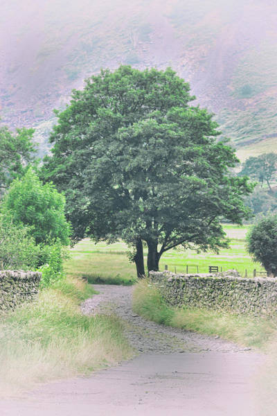 Wall Art - Photograph - Country Lane by Martin Newman
