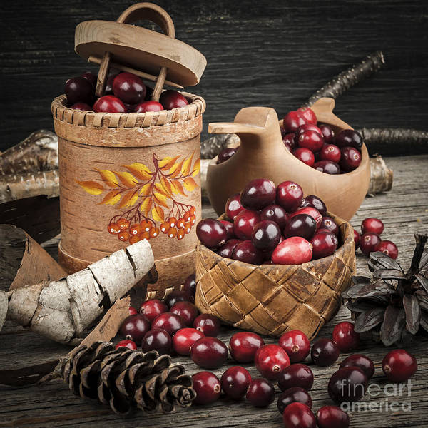 Photograph - Cranberries Still Life by Elena Elisseeva
