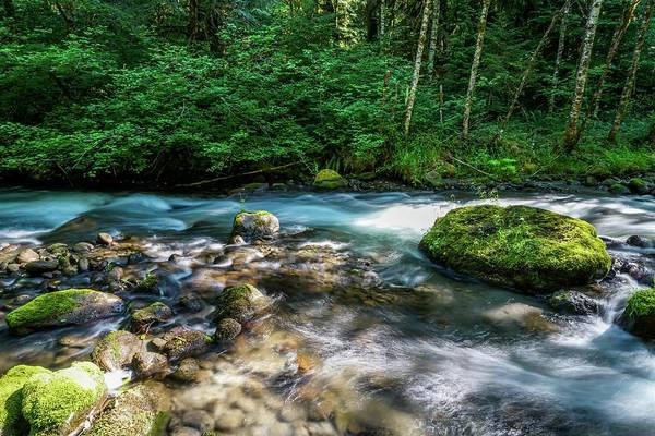 Tree Wall Art - Photograph - Crystal Clear Waters by Ric Schafer