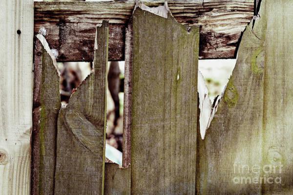 Wall Art - Photograph - Damaged Fence by Tom Gowanlock