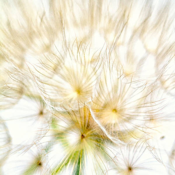 Wall Art - Photograph - Dandelion by Stelios Kleanthous