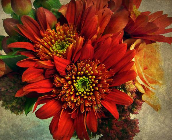Zinnia Flower Wall Art - Photograph - Deeply by Jessica Jenney