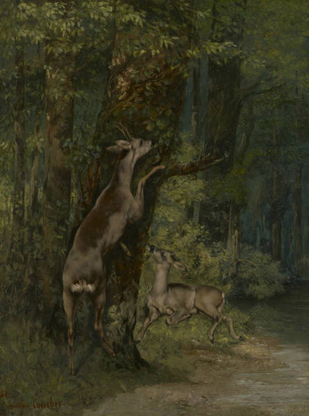 Painting - Deer In The Forest  by Gustave Courbet