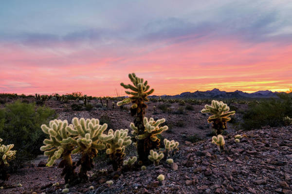 Photograph - Desert Colors by Margaret Pitcher