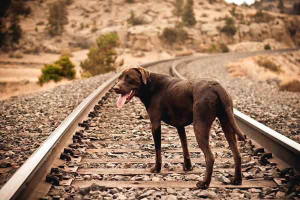 Transportation Digital Art - Dog by Maye Loeser