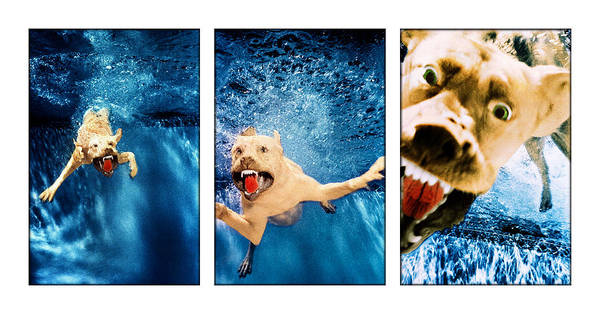 Photograph - Dog Underwater Series by Jill Reger