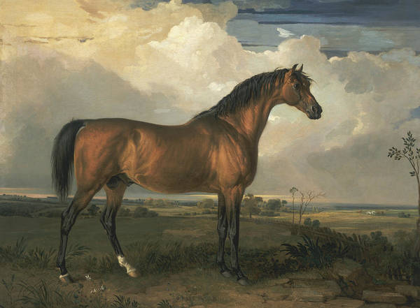 Ward Painting - Eagle, A Celebrated Stallion by James Ward