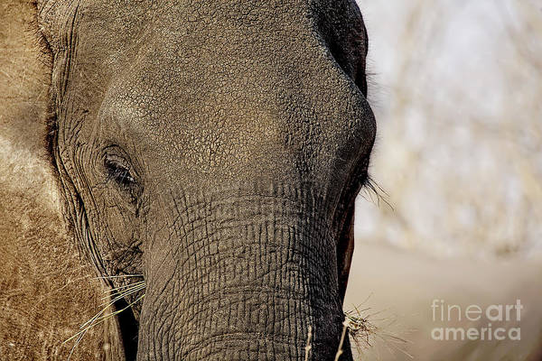 Photograph - Elephant Eye by Kay Brewer