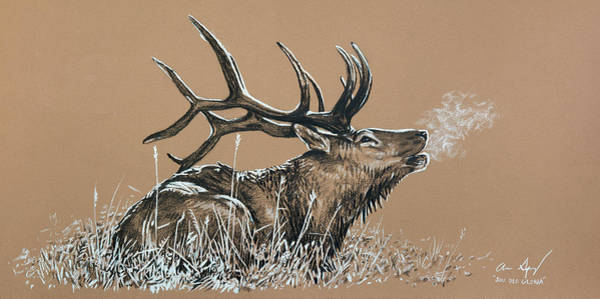 Drawing - Elk Bugle by Aaron Spong