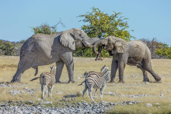 Wall Art - Photograph - Etosha - Namibia by Joana Kruse