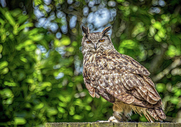 Twitcher Wall Art - Photograph - Eurasian Eagle Owl. by Angela Aird