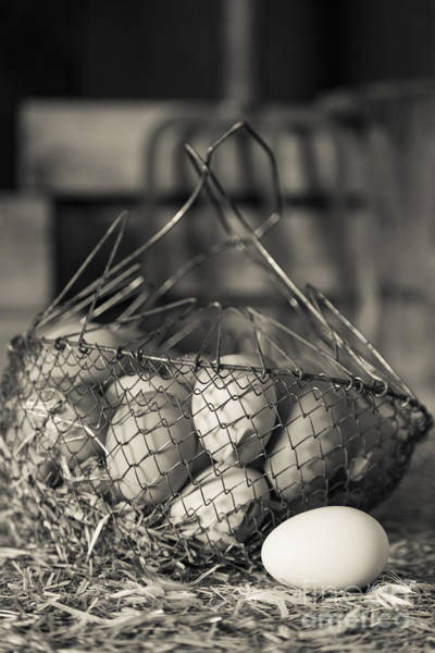Photograph - Farm Fresh Eggs Bw by Edward Fielding