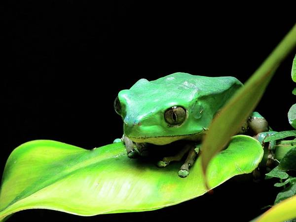 Photograph - Re Upload Feeling Froggy by Jenny Regan