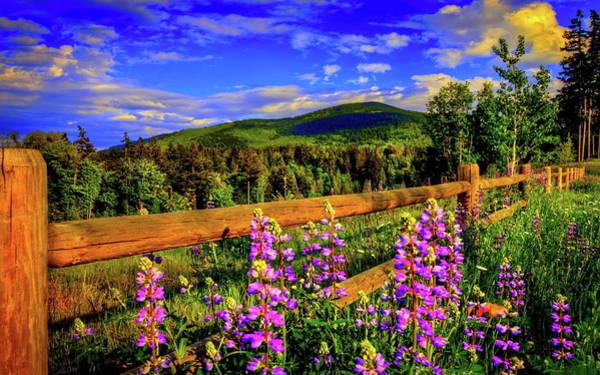 Flower Digital Art - Fence by Maye Loeser