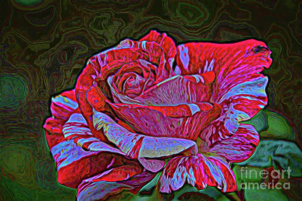 Photograph - Fire And Ice by Diana Mary Sharpton