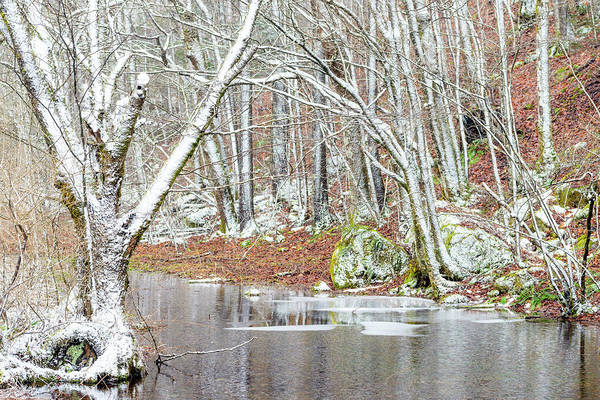 Photograph - First Snow Cranberry Wilderness by Thomas R Fletcher