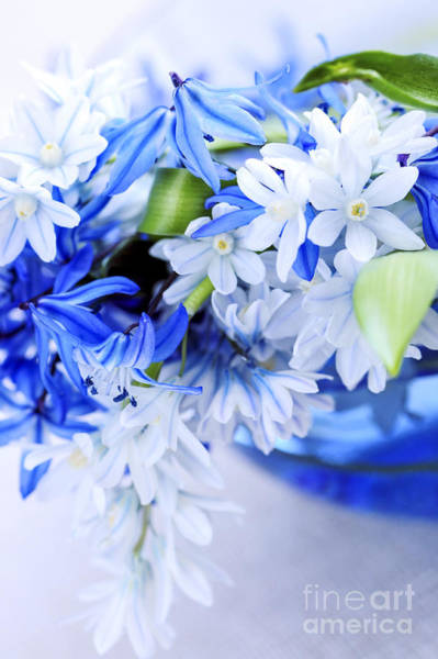 Photograph - First Spring Flowers by Elena Elisseeva