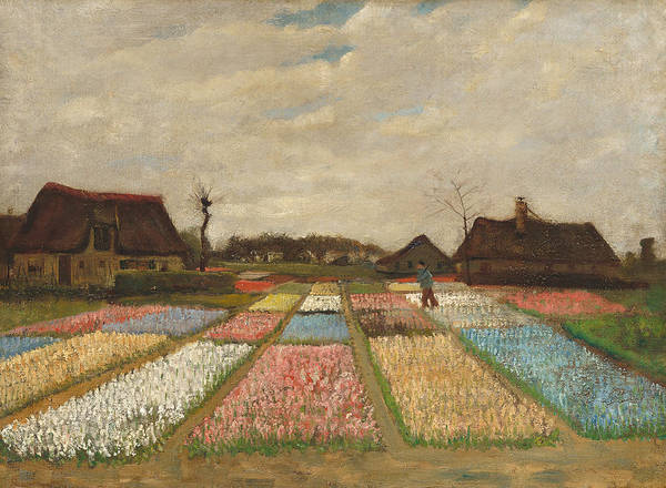 Allotment Wall Art - Painting - Flower Beds In Holland by Vincent Van Gogh