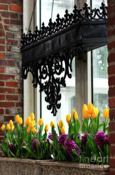 Photograph - Flowers In Window Boxes by Angela Rath
