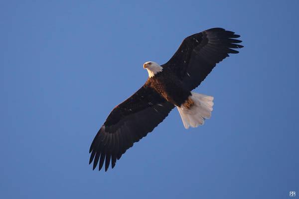 Photograph - Fly Like An Eagle by John Meader