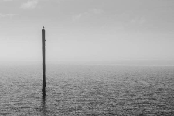 Photograph - Fog On The Cape Fear River by Willard Killough III