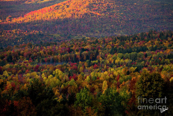Photograph - Forest  by Alana Ranney