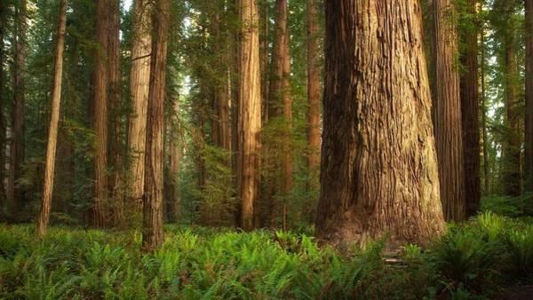 Landscape Digital Art - Forest by Maye Loeser