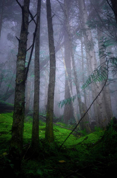 Photograph - Forest Mysteries by Tara Turner