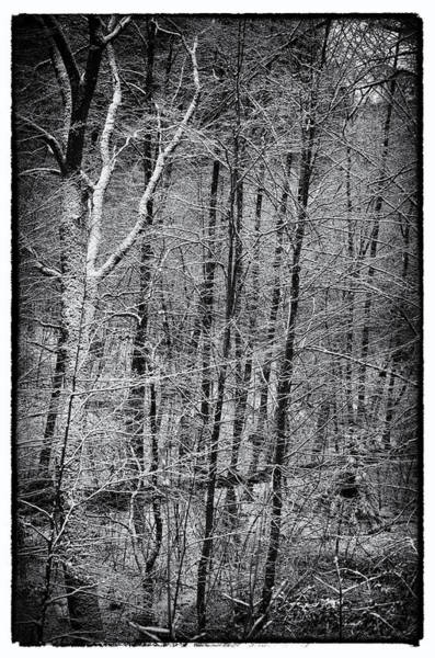 Photograph - Forest Snow by Miguel Winterpacht