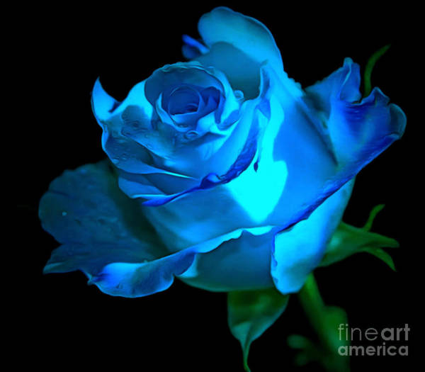 Rose Bud Photograph - Forever In Love by Krissy Katsimbras
