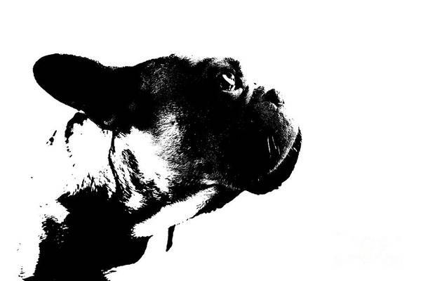 Wall Art - Photograph - French Bulldog by Jana Behr