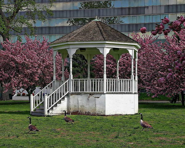 Gazebo In The Park Art Print