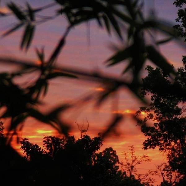 Photograph - Good Morning My Beautiful Friends! by Cheray Dillon