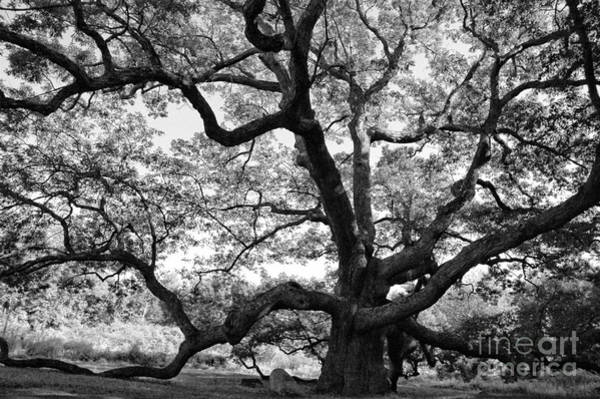 Wall Art - Photograph - Granby Oak by HD Connelly