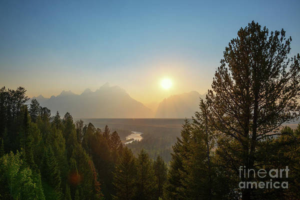 Moose Art Photograph - Grand Teton National Park  by Michael Ver Sprill