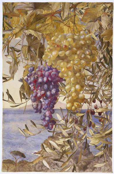Roderick Painting - Grapes And Olives by MotionAge Designs