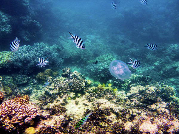 Photograph - Great Barrier Reef by Walt Sterneman