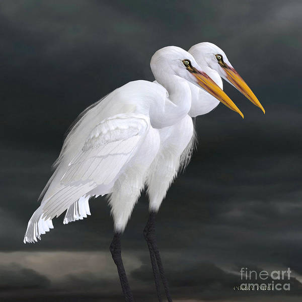 Vertebrate Painting - Great Egret by Corey Ford