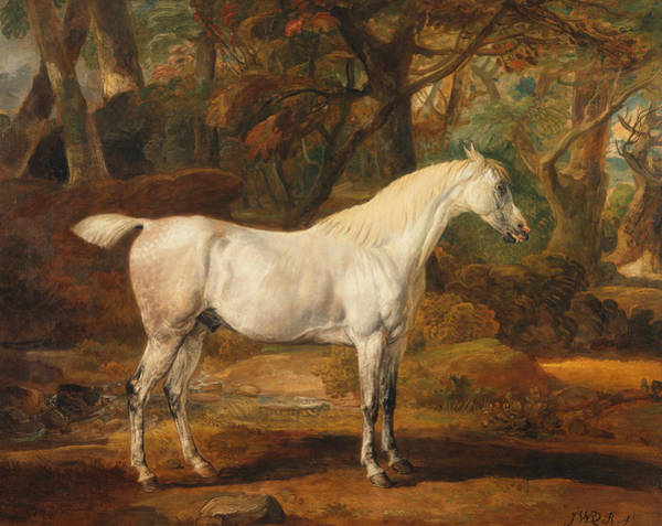 Ward Painting - Grey Arabian Stallion, The Property Of Sir Watkin Williams-wynn by James Ward