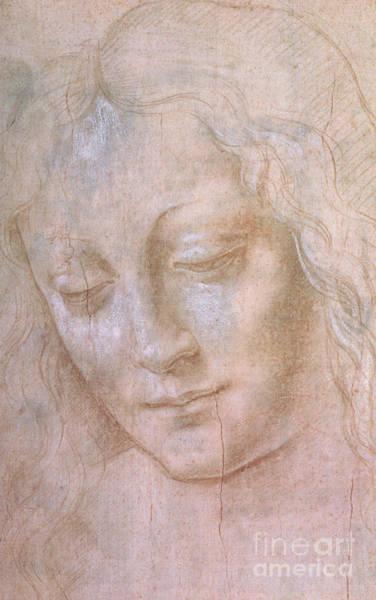 Madonna Drawing - Head Of A Woman  by Leonardo da Vinci