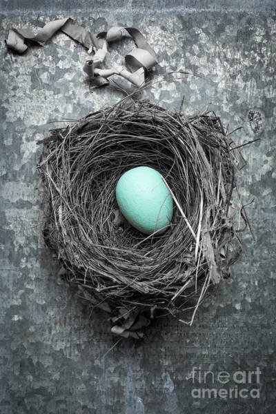 Birds Eggs Photograph - Home Sweet Home by Edward Fielding